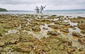 Coral rocks — Stock Photo