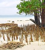 Mangroven — Stockfoto