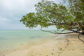 Tree at sea beach — Stock Photo
