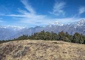Alpejska łąka — Zdjęcie stockowe
