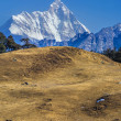 Snow clad peak and meadow — Stock Photo