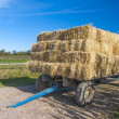 Hay Wagon 3904 — Stock Photo