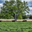 Grazing 4768 — Stock Photo