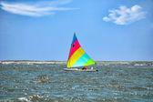 Sailing Sunfish — Stock Photo