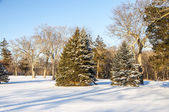 Snowy Scene 7659 — Stock Photo
