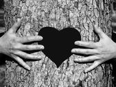 Hands on a tree.St. Valentine's Day — Stock Photo