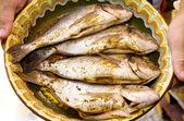 Sea breams fish on plate — Foto de Stock