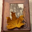 Close up of an album and Autumn leaves. — Stock Photo