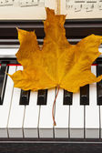 Autumn leaf on the piano. — Stock Photo