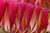 Krásné červené podzimní listí — Stock fotografie