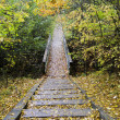 Wooden steps on the trail in the forest — Stock Photo