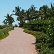 Tranquil path in a tropical setting — Stock Photo