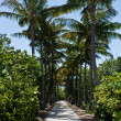 Walkway lined with palm trees — Stock Photo