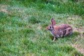 Rabbit in the yard — Stock Photo