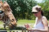 Reticulated Giraffe being fed by a woman — Stock fotografie