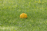 Ball in the grass — Stock Photo
