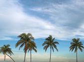 Palm trees — Fotografia Stock