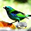 Beautiful colorfull bird — Stock Photo