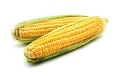 Ears of maize — Stock Photo