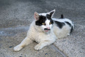 Cat with funny mustache — Stock Photo