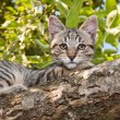 Cat in a tree — Stock Photo #49472425