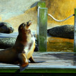 Sea lion enjoying the sun. — Stock Photo