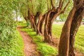 Country road running through tree alley — Stock Photo