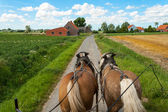 Through the flemish fields with horses and covered wagon. — Stock Photo