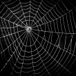 Stock Photo: Pretty scary frightening spider web for halloween