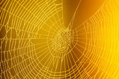 Spider web pattern for halloween scary spiderweb — Stock Photo