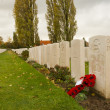Stock Photo: Poppies on Tyne cot cemetery first world war flanders Belgium