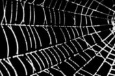 Pretty scary frightening spider web for halloween — Stock Photo