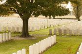 World war one cemetery tyne cot belgium flanders ypres — Stock Photo