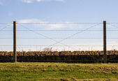 Barbed wire fence Trenches of Death flanders Dixmude great world war — Stock Photo