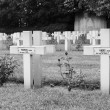 French cemetery from the First World War in Flanders belgium. — Stock Photo #46556995
