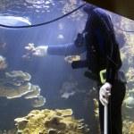 Diver diver — Stock Photo #19830991