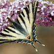 Butterfly — Stock Photo #24578541