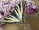 Butterfly — Photo
