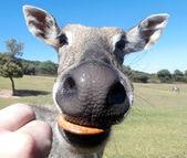 Funny animal eating — Stock Photo