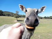Funny animal eating — Foto Stock
