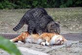 Gatti gatti — Foto Stock