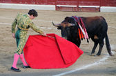 Bullfight — Stockfoto