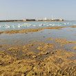 Royalty-Free Stock Photo: Low tide in the bay of Cadiz