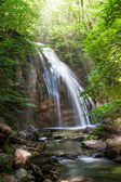 Cascata nella foresta — Foto Stock