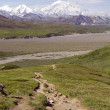 Stock Photo: Mount McKinley