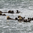 Sea otters — Stock Photo