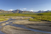 Scenic view Denali — Photo