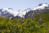 Tundra flowers and Worthington Glacier — Stock Photo