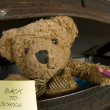 Stock fotografie: Bear with pencil and notebook announcing back to school