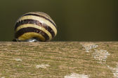 Snail on wooden pillar — Stock Photo